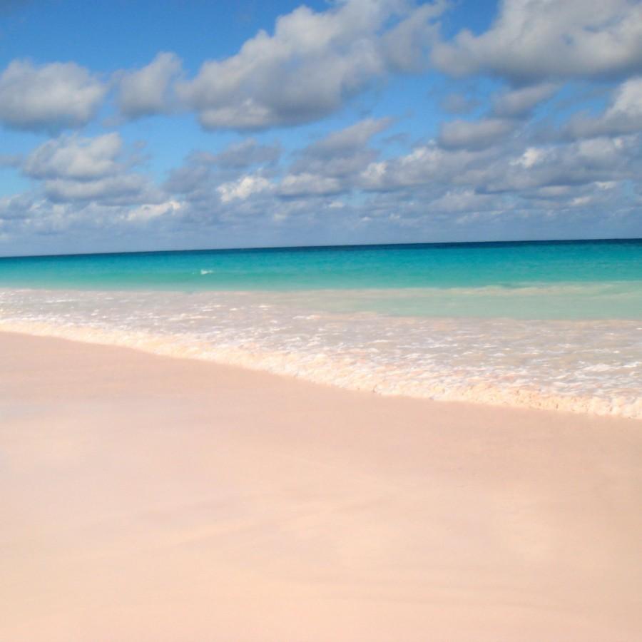 pink sand beach-harbour island_Mike's Birds